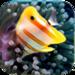 Little Big Aquarium